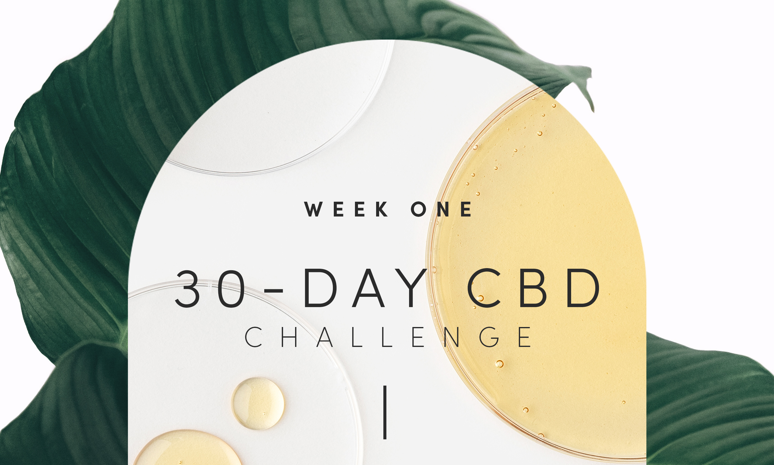 Week 1 Recap of Our 30-Day CBD Challenge